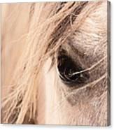 Horses Soul Canvas Print
