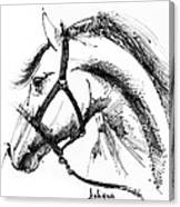 Horse Face Ink Sketch Drawing Canvas Print