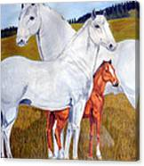 Horse Family Canvas Print
