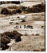 Horse Farm At Kourion Canvas Print