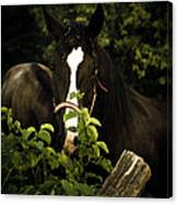 Horse Fence Canvas Print