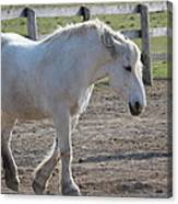 Horse Friends Canvas Print