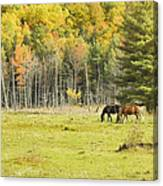 Horse Grazing In Field Autumn Maine Canvas Print
