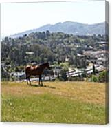 Horse Hill Mill Valley California 5d22662 Canvas Print