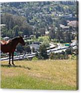 Horse Hill Mill Valley California 5d22663 Canvas Print
