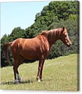 Horse Hill Mill Valley California 5d22683 Canvas Print
