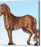 Horse Historiae Animalium  Canvas Print