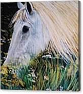 Horse Ign Canvas Print