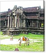Horse In Front Of Outer Building In Angkor Wat In Angkin Angkor Wat Archeological Park-cambodia Canvas Print