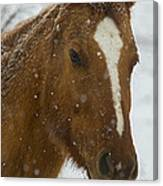 Horse In Snow   #4651 Canvas Print