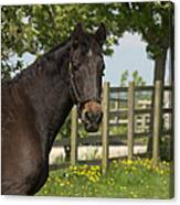 Horse In Spring Canvas Print
