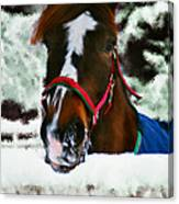 Horse In The Snow Canvas Print