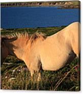 Horse In Wildflower Landscape Canvas Print