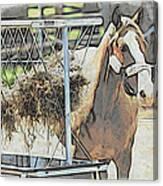 Horse N Hay Canvas Print