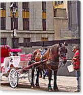 Horse Needs Water In Old Montreal-quebec-canada Canvas Print