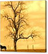 Horse On The Hill Canvas Print