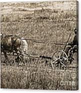 Horse Power Canvas Print