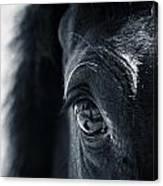 Horse Reflection Canvas Print