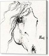 Horse Sketch 2014 05 24a Canvas Print