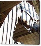 Horse Stripes Canvas Print