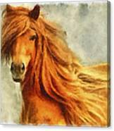Horse Two Canvas Print