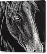 Horse Up Close Canvas Print