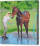 Horse   Wash Canvas Print