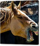 Horse Yawn Canvas Print