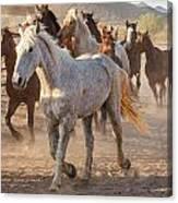 Horses 7 Canvas Print