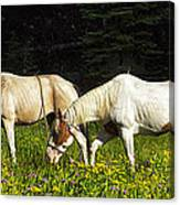 Horses Among Wildflowers Canvas Print
