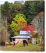 Horses And Barn In The Fall Canvas Print
