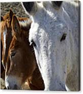 Horses And Mules   #0757 Canvas Print