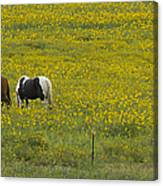 Horses And Wildflowers   #8511 Canvas Print