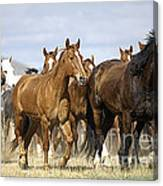 Horses-animals-2 Canvas Print