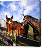 Horses At The Fence Canvas Print