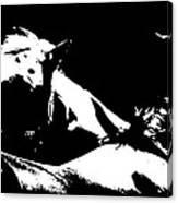Horses - Black And White Canvas Print