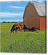 Horses By A Barn Along Confederation Trail-pei Canvas Print