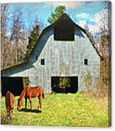 Horses Call This Old Barn Home Canvas Print