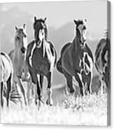 Horses Crest The Hill Canvas Print