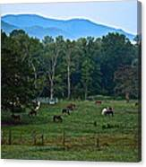 Horses Graze At Dawn Canvas Print