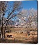 Horses Graze Beside The Owens River Near Bishop Canvas Print