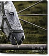 Horse's Head Canvas Print