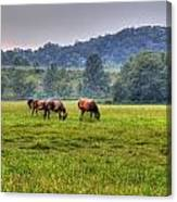 Horses In A Field 2 Canvas Print