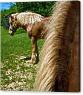 Horses In Meadow Canvas Print
