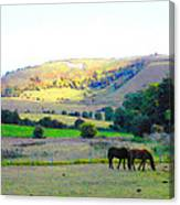 Horses In The English Countryside Canvas Print