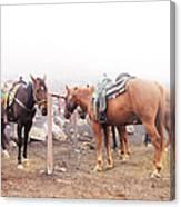Horses In The Mist - Haleakala Canvas Print