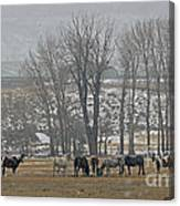 Horses In The Snow   #7940 Canvas Print