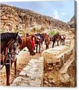 Horses Of Petra Canvas Print