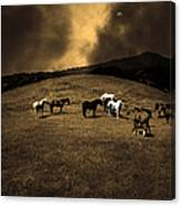 Horses Of The Moon Mill Valley California 5d22673 Sepia Canvas Print