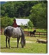 Horses On A Farm Canvas Print